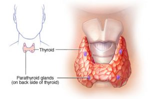 Nedostatak kalcija i tireoidne žlijezde, paratiroidni hormon
